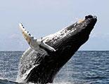 CyberDodo y las ballenas (1-10)