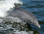 CyberDodo y los delfines (1-11)