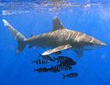 CyberDodo y los tiburones (1-27)