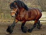 CyberDodo y los caballos de tiro (1-36)