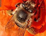 Test sobre las abejas