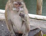 Test sobre los monos (1-13)