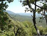 Test sobre los bosques (1-9)