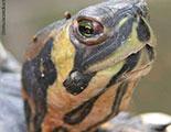 Test sobre las tortugas