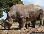 Test sobre los rinocerontes
