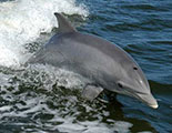 Test sobre los delfines (1-11)