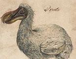 Test sobre los dodos (1-2)