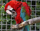 Test sobre el tráfico de animales salvajes