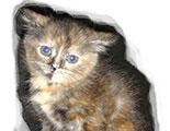 Test sobre los animales abandonados (1-43)