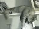¡Un gato!