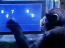 El chimpancé tiene mejor memoria que los humanos