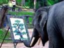 El elefante Picasso..